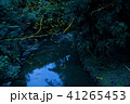 ホタル ゲンジボタル 川の写真 41265453