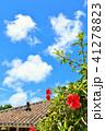 晴れ ハイビスカス 竹富島の写真 41278823