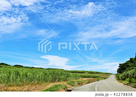 沖縄 青空と道とサトウキビ畑 41278838
