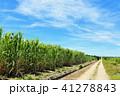 青空 晴れ 沖縄の写真 41278843