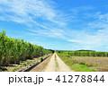 晴れ 波照間島 南国の写真 41278844