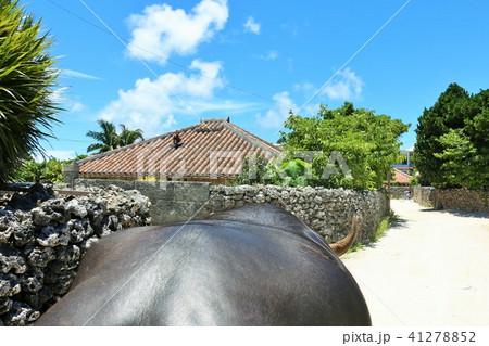 沖縄 竹富島 水牛車からの風景 41278852