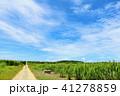 晴れ 空 沖縄の写真 41278859
