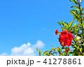 青空 晴れ 花の写真 41278861