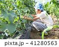 野菜を収穫する子ども 41280563