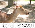 奈良公園の鹿 41283511