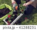 手 植栽 植え付けの写真 41288231