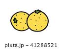 グレープフルーツ 41288521