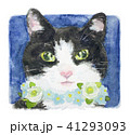花 猫 水彩のイラスト 41293093