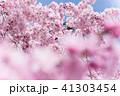 枝垂れ桜 41303454