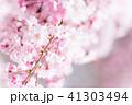 枝垂れ桜 41303494