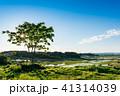 田園 田んぼ 水田の写真 41314039