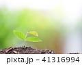 グリーン 緑 緑色の写真 41316994