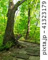 遊歩道 風景 森林の写真 41323179