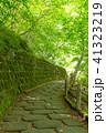 遊歩道 風景 森林の写真 41323219