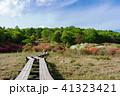 井戸湿原 風景 遊歩道の写真 41323421