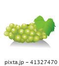 果物 マスカット 葡萄のイラスト 41327470