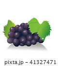 果物 フルーツ 巨峰のイラスト 41327471