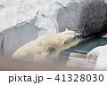 シロクマ 動物園 クマの写真 41328030