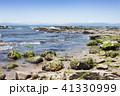 野間 海岸 海の写真 41330999