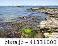 野間 海岸 海の写真 41331000