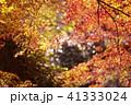 紅葉 41333024