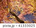 紅葉 41333025