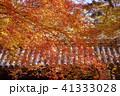 紅葉 41333028