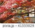 紅葉 41333029