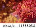 紅葉 41333038