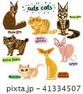 ねこ ネコ 猫のイラスト 41334507