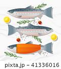 サケ サーモン 鮭のイラスト 41336016