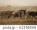 ヌー ウシカモシカ 哺乳類の写真 41336098