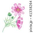 コスモス 秋 花のイラスト 41338264