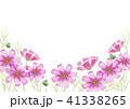 コスモス 秋の花 背景 41338265