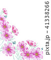 コスモス 秋 秋桜のイラスト 41338266