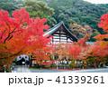 禅林寺 京都 紅葉の写真 41339261
