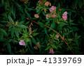 花 フラワー お花 41339769
