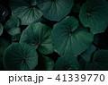 熱帯性 熱帯産 熱帯 41339770
