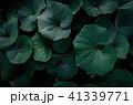熱帯性 熱帯産 熱帯 41339771