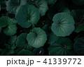 熱帯性 熱帯産 熱帯 41339772