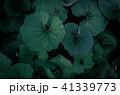 熱帯性 熱帯産 熱帯 41339773