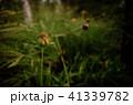 草 芝生 芝 41339782