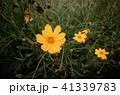 草 芝生 芝 41339783