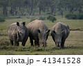 犀 ミナミシロサイ ソリオ野生動物保護区の写真 41341528