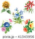 水彩で描いた夏の花5種類セット 41343956
