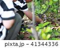 公園で昆虫採集をする子供たち 41344336