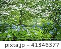 立岡自然公園の紫陽花  41346377