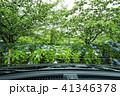立岡自然公園の紫陽花  41346378