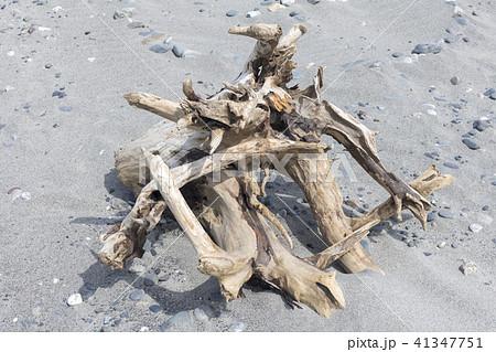 砂浜の流木 41347751